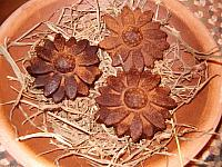 beeswax brown eyed Susan flowers